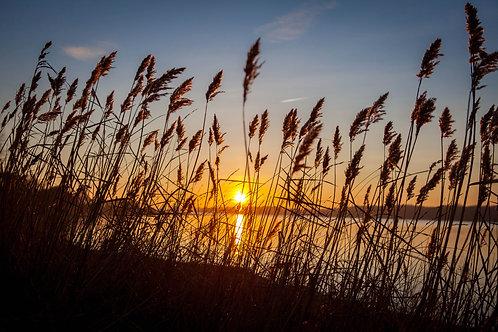 Grass Sunset  - Photo Print