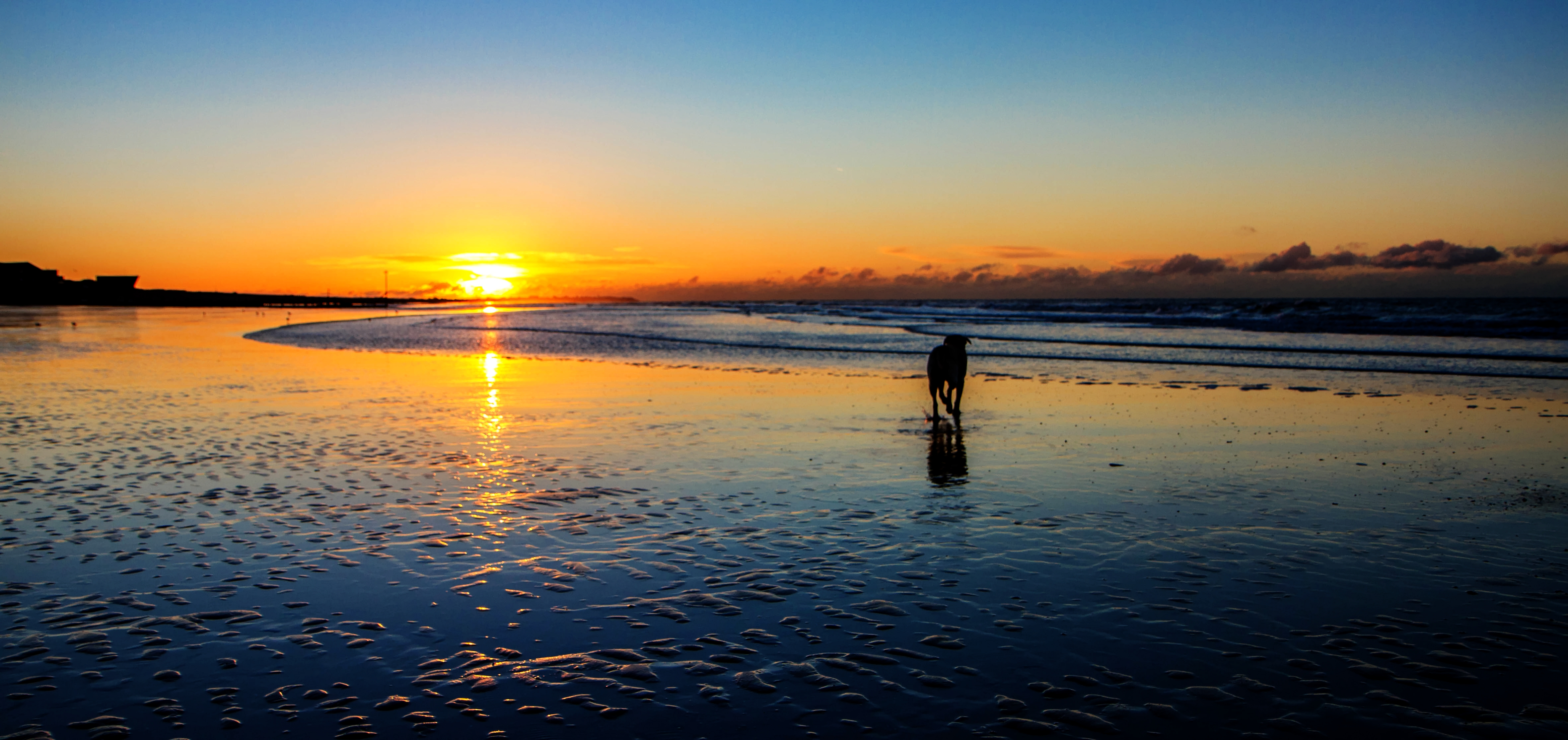 Sunrise Dog Walk