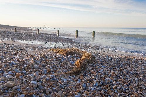 Seaweed On The Beach - Photo Print