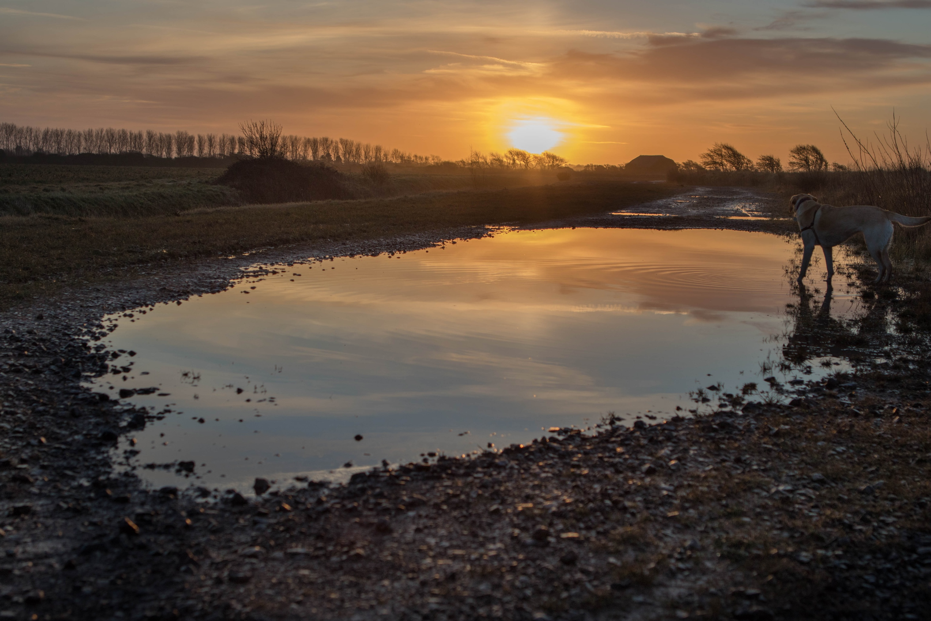 Medmerry Reflections