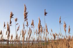 Spring Sea Grass