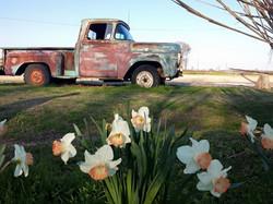 truck daff 1