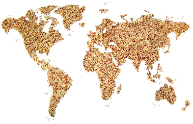 map-rice-1181335.png