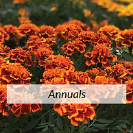 Annuals.png