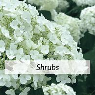 Shrubs2.png