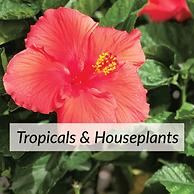 Trops&House-plants2.png