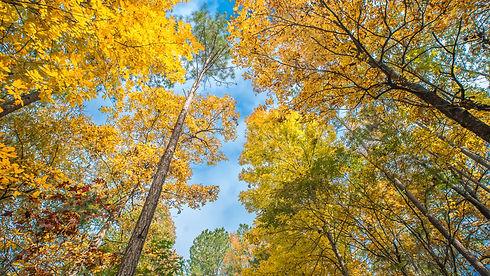 Woodlands Fall copy.jpg