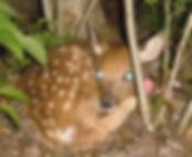 baby wildlife