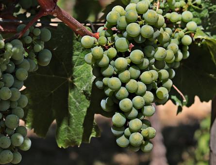 wine-3632560_1280.jpg