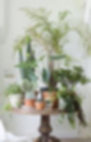 foto%20kamerplanten_edited.jpg