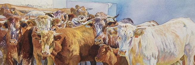 cattle in seville 2 15x5.5 watercolor pe