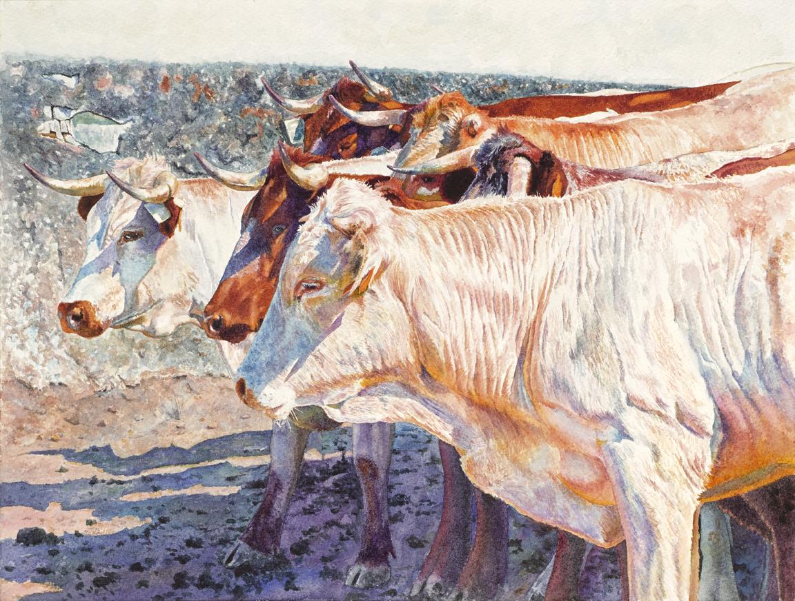 Cattle in Seville