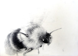 Flight of the Bumble Bee 2