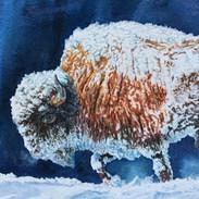 Blizzard bison.jpg