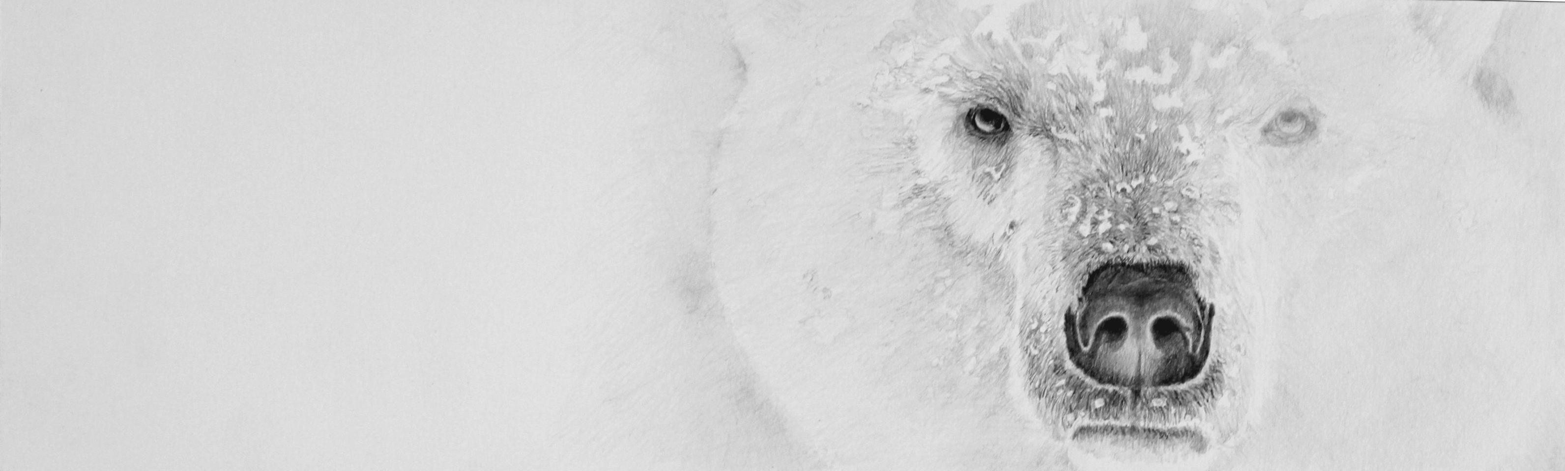 "Polar Bear ""Surviving the Storm"""