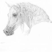 Arabian 1.  9 x 12.jpg