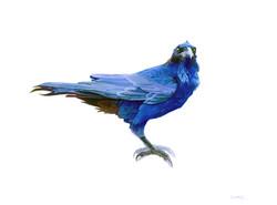 Blue reverence