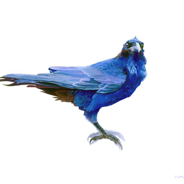 Blue reverence.jpg