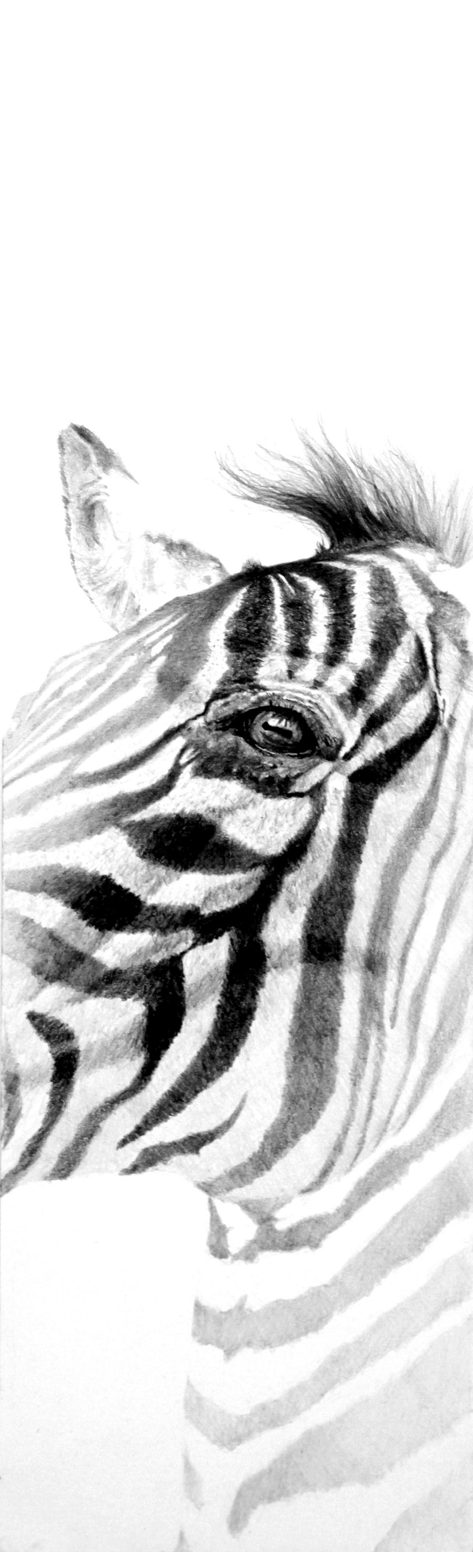 """Zebra """"Stripes always be the same"""""""
