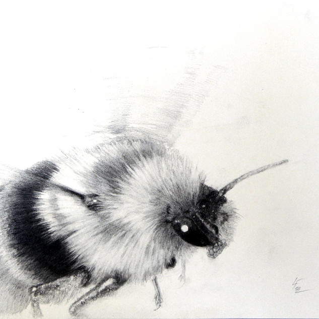 Flight of the Bumble Bee 2.jpg