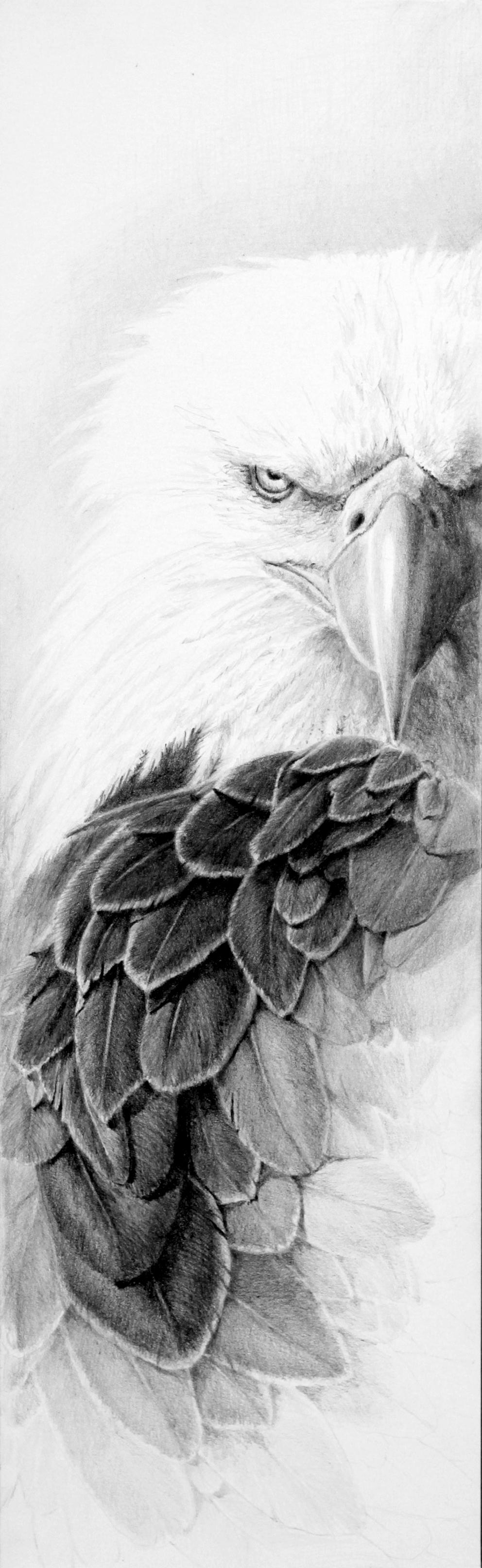 """Eagle """"Ruffled"""""""
