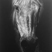 Arabian 4.jpg