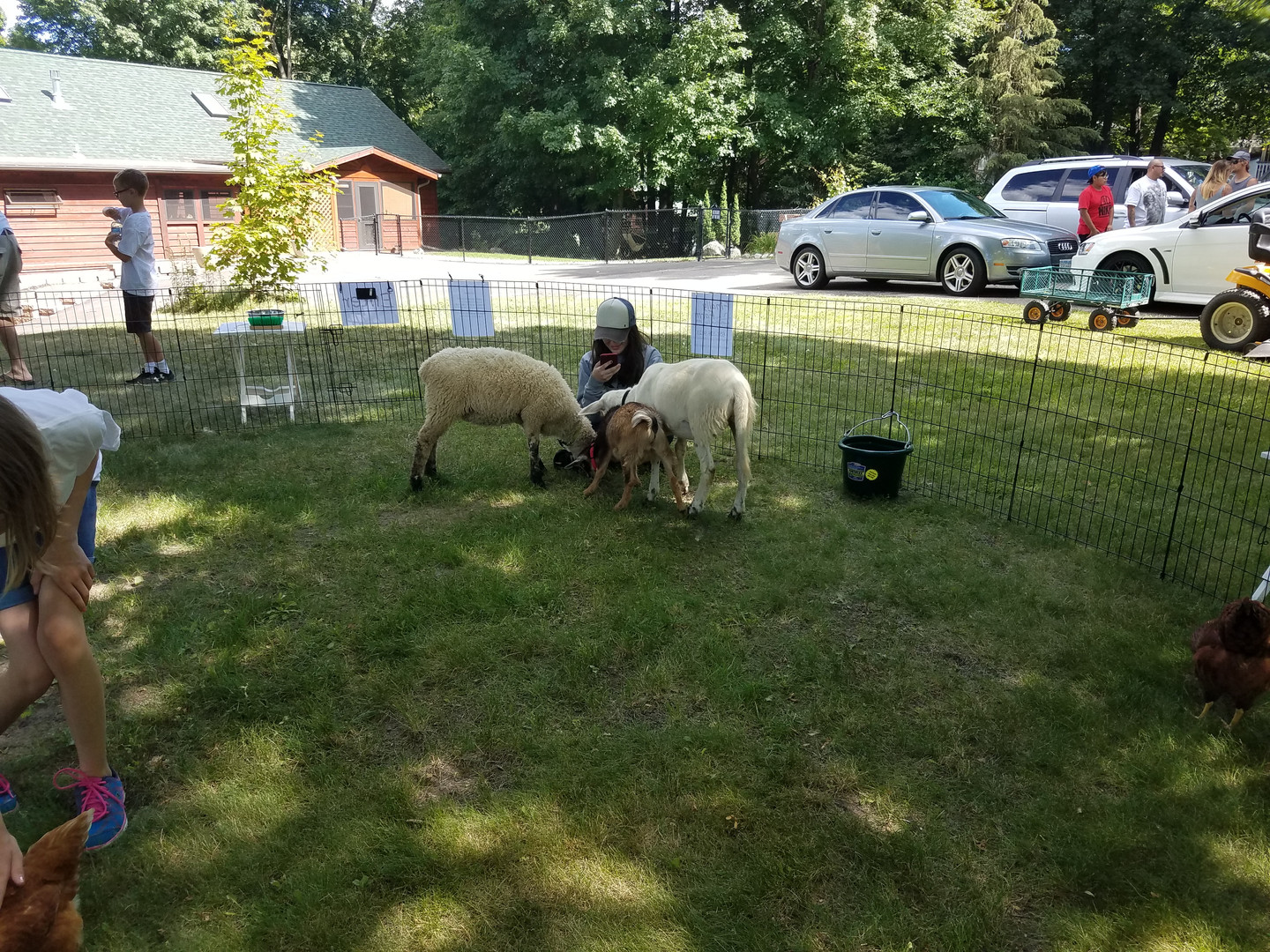 Our sweet sheep and goats are very curious and love to meet new people!