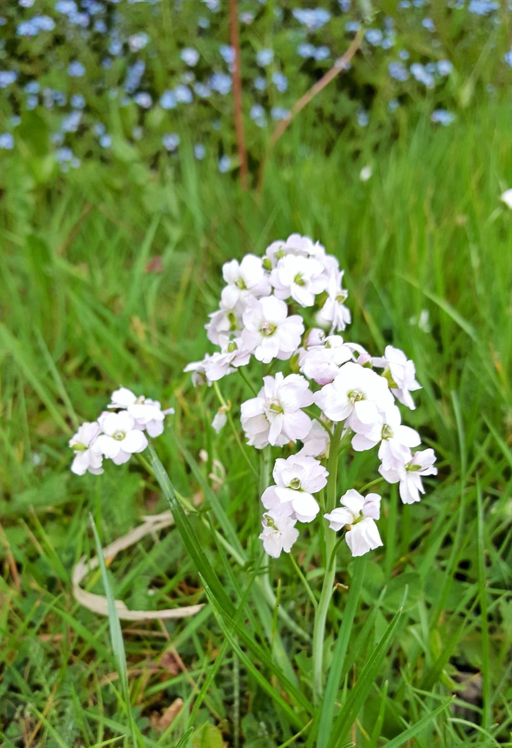 White flower in grass