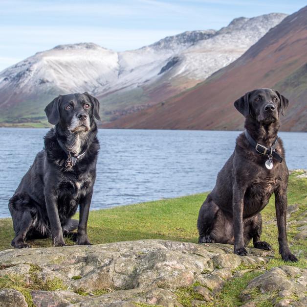 Henry & Alfie at Wastwater edit.jpg
