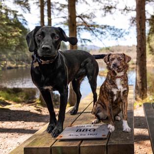 Reggie & Lily Scotland for print.jpg
