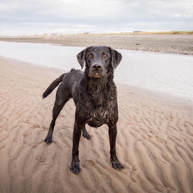 Alfie on the beach.jpg