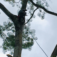 Guardian in Instalation in Jungle canopy