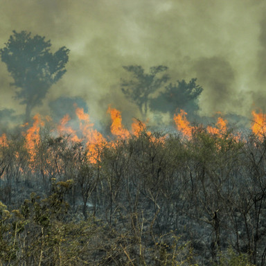 Fires in the Amazon forest - global clim