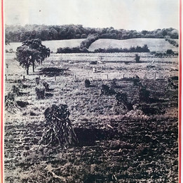 The farmland that would eventually be replaced by Valley Pond. (Photo by the Boston Globe, Oct. 15, 1950).