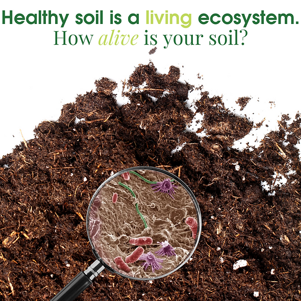 Biomass Soil Testing (Expedited)