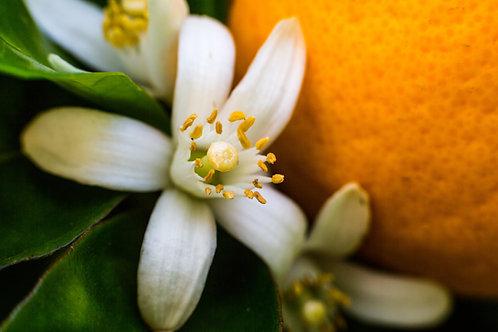 Huile de Massage Végétale, senteur FLEUR D'ORANGER- 1 Litre