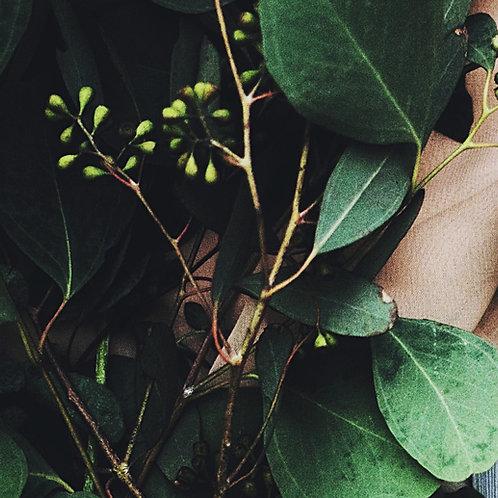 Huile Décontractante à l'Eucalyptus - 1 Litre