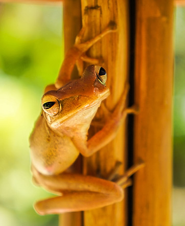 Frog on a stick.