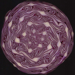 1016px-Red_Cabbage_cross_section_showing_spirals