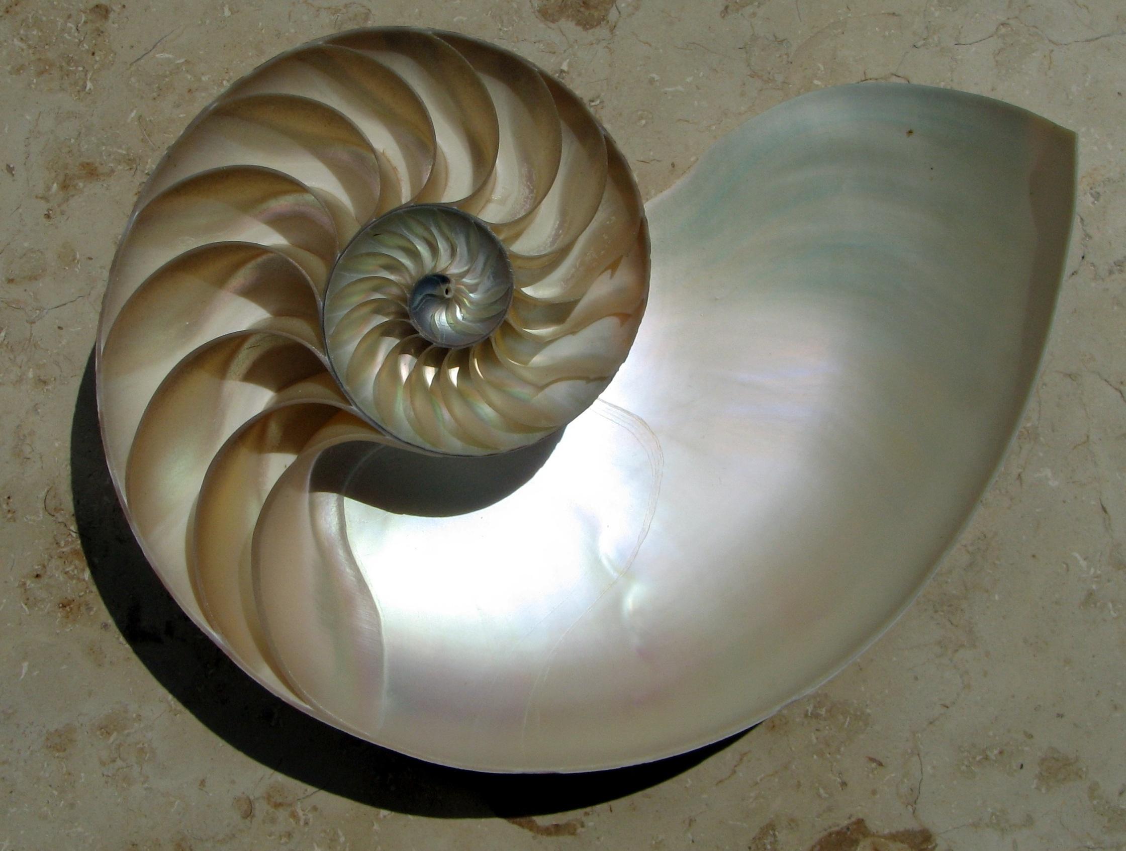 NautilusCutawayLogarithmicSpiral