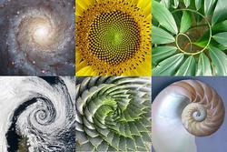 spirals in the universe