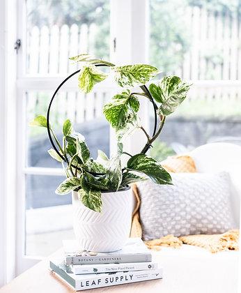 'Orbit' Plant Trellis