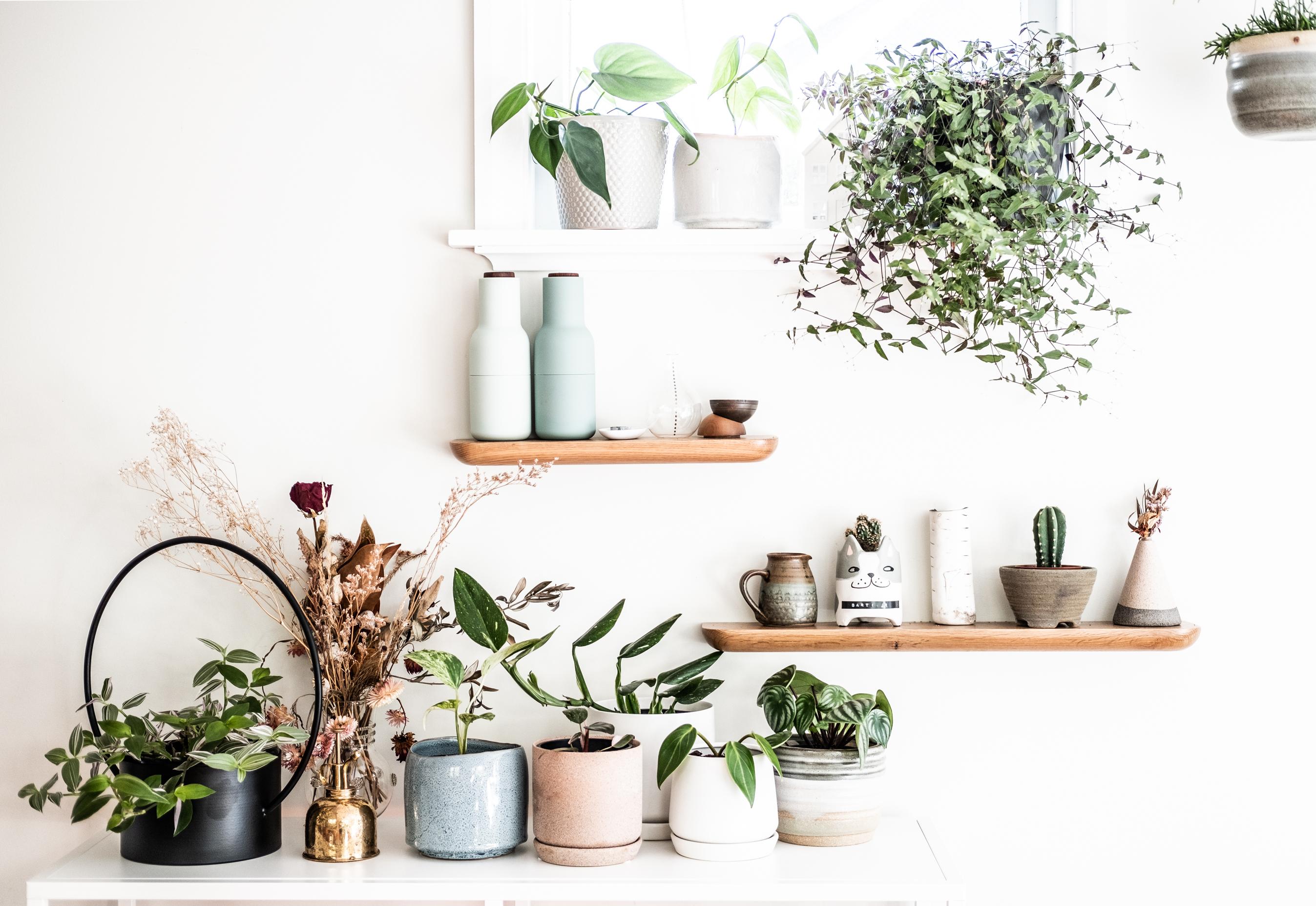 The Plant Epicurist