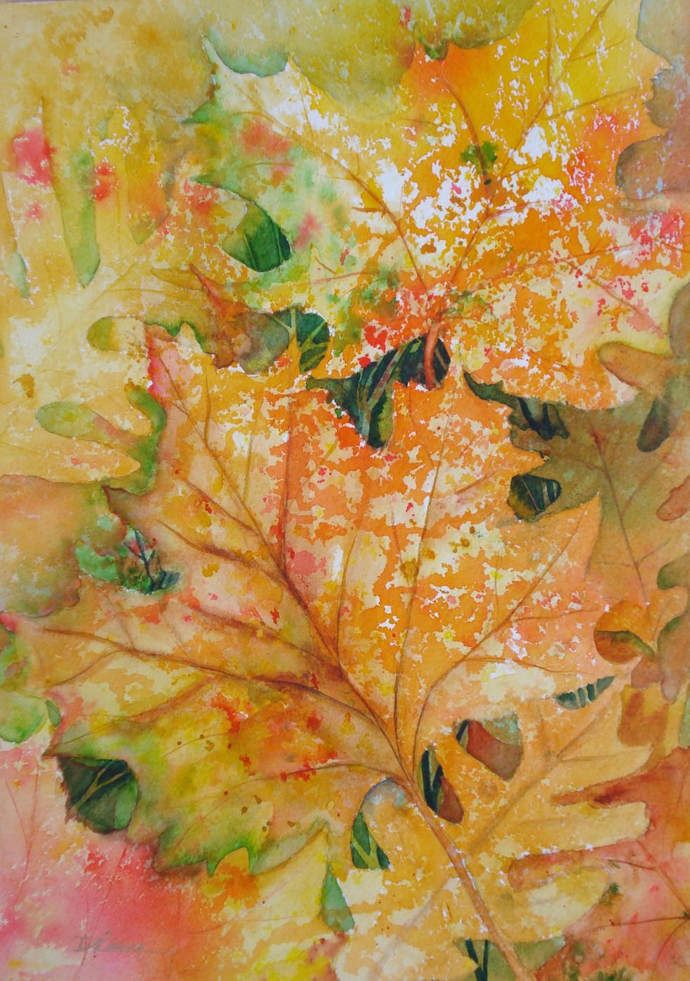 """Maple Leaf  15"""" x 10"""""""