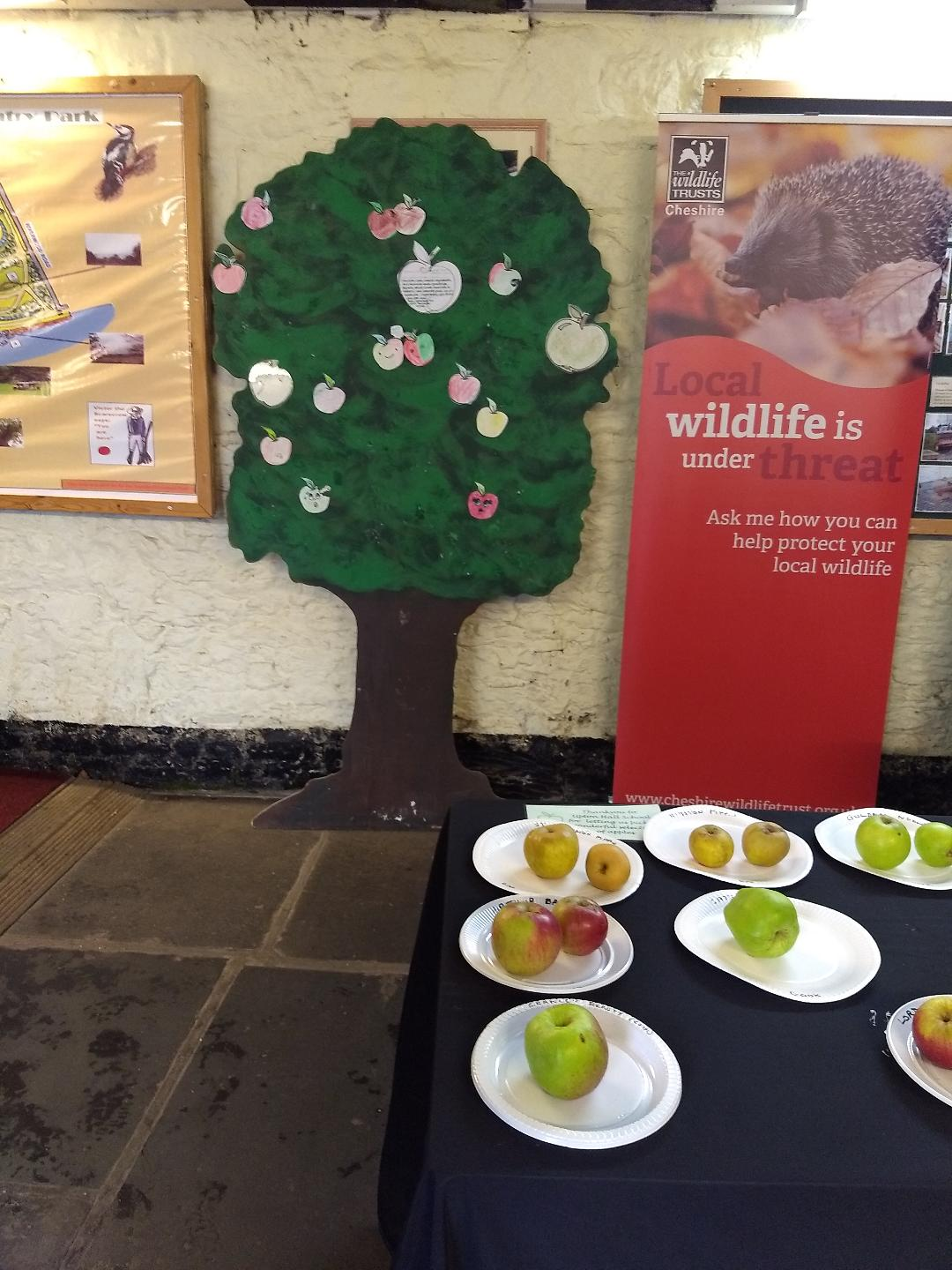Apple Day display
