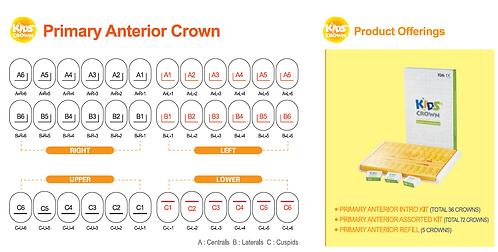 Primary Anterior Crowns