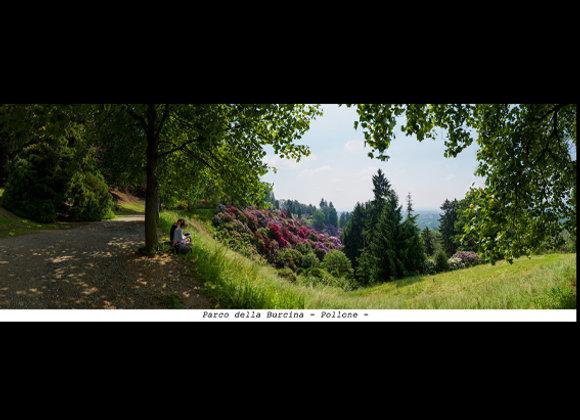 Stampa Parco Burcina - Pollone (BI)  cm. 60 x 20