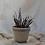 Thumbnail: Speckle Pot