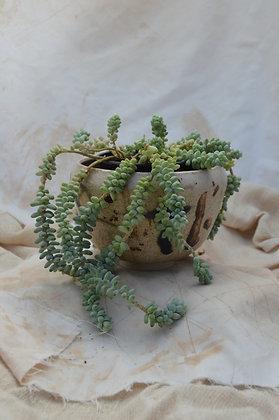 Speckle Pot II