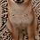Thumbnail: Boba, Shiba Inu